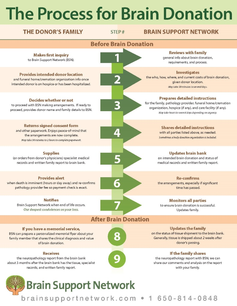 Brain Donation Process Infographic